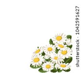 flowers of chamomile  bouquet.... | Shutterstock .eps vector #1042591627