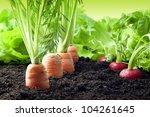 vegetables growing in the garden | Shutterstock . vector #104261645