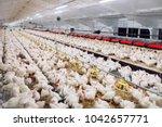 indoors chicken farm  chicken... | Shutterstock . vector #1042657771