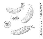 vector cucumber hand drawn...   Shutterstock .eps vector #1042666297