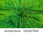 Aerial close view of an agriculture wheat field - stock photo