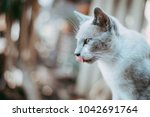 The White Gray Cat Looked At...