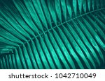tropical palm leaf for... | Shutterstock . vector #1042710049