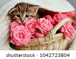 Stock photo small kitten in the basket with pink roses kitty and flowers 1042723804