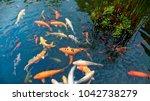 colorful japanese koi carp fish ... | Shutterstock . vector #1042738279