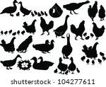 House Ducks Of A Hen Ducklings...