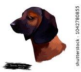 bavarian mountain hound dog... | Shutterstock . vector #1042780855
