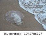 jellyfish at sai keaw beach in...   Shutterstock . vector #1042786327