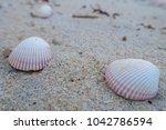 shells at sai keaw beach in... | Shutterstock . vector #1042786594