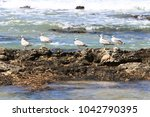 coast of the mediterranean sea... | Shutterstock . vector #1042790395