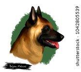belgian malinois  mechelaar ... | Shutterstock . vector #1042805539