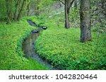 central poland  forest netscape ... | Shutterstock . vector #1042820464