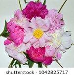 peonies flowers still life.... | Shutterstock . vector #1042825717