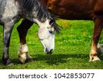 horse in the pasture  sunny day....   Shutterstock . vector #1042853077