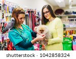 Stock photo pomeranian dog with his owner at pet shop 1042858324
