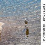 a beautiful graceful white...   Shutterstock . vector #1042911061