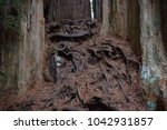 Roots Piled Up In An Area...