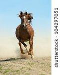 hurrying horse | Shutterstock . vector #104297051