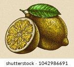engrave isolated lemon hand... | Shutterstock . vector #1042986691