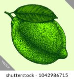 engrave isolated lime hand... | Shutterstock .eps vector #1042986715