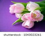 pink fresh spring tulips... | Shutterstock . vector #1043023261