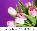 pink fresh spring tulips... | Shutterstock . vector #1043023279