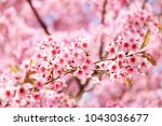 spring border abstract blured... | Shutterstock . vector #1043036677