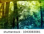 forest  reflection in water   Shutterstock . vector #1043083081