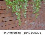 green vine plant hanging brown... | Shutterstock . vector #1043105371
