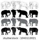 set of wild elephant isolated...   Shutterstock . vector #1043113021
