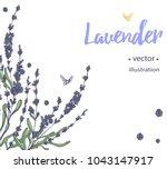 vector lavender hand drawn... | Shutterstock .eps vector #1043147917