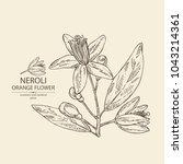 neroli  orange flower  orange... | Shutterstock .eps vector #1043214361