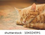 Stock photo peaceful orange red tabby cat male kitten curled up sleeping 104324591
