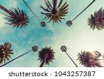los angeles palm trees  low... | Shutterstock . vector #1043257387