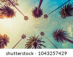 los angeles palm trees on sunny ...   Shutterstock . vector #1043257429