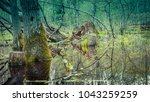 A Dense Forest Swamp With...