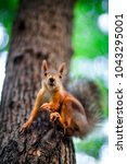 squirrel in the park on the tree | Shutterstock . vector #1043295001