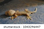abnormal lizard stand on the...   Shutterstock . vector #1043296447