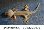abnormal lizard stand on the...   Shutterstock . vector #1043296471