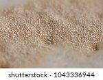 brewer's yeast on the wort... | Shutterstock . vector #1043336944