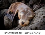 Baby Sea Lion Sleeping In The...