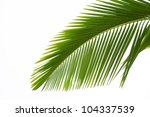 leaf of palm tree isolated on... | Shutterstock . vector #104337539