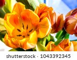 beautiful spring tulips | Shutterstock . vector #1043392345