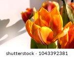 beautiful spring tulips | Shutterstock . vector #1043392381