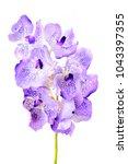 purple vanda orchid  | Shutterstock . vector #1043397355