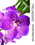 purple vanda orchid  | Shutterstock . vector #1043397361