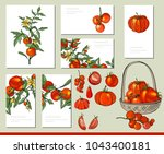 tomato vegetable set with... | Shutterstock .eps vector #1043400181