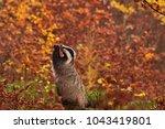 beautiful praying european... | Shutterstock . vector #1043419801