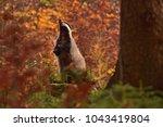 beautiful praying european... | Shutterstock . vector #1043419804