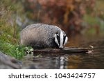 drinking beautiful european... | Shutterstock . vector #1043424757